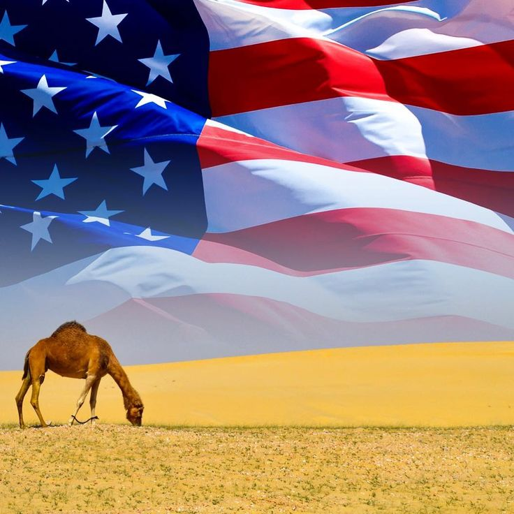 Happy Independence Day from all of us here at DromeDairy USA!!!🇺🇸🇺🇸🇺🇸 #dromedairy #superfood #dairyalternative #dairy #life #paelo #paleoapproved