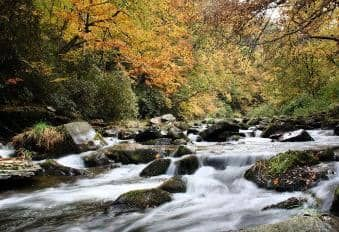 Mountain streams near at our Pet Friendly Cabins in Bryson City NC