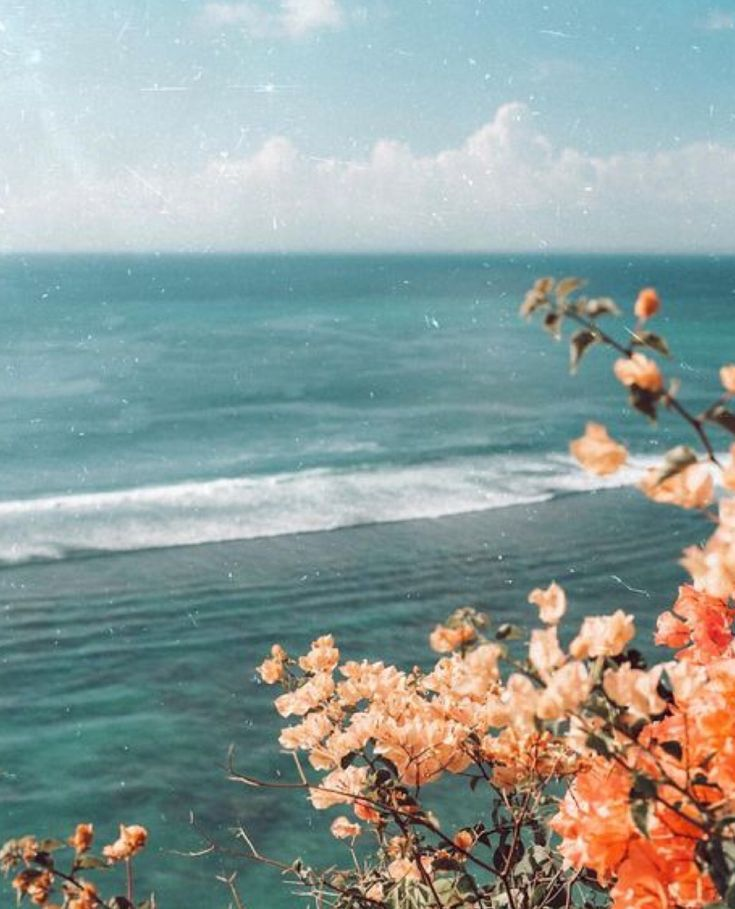 Flowers And The Ocean Vacation Mood Aesthetic Photography Nature Aesthetic Wallpapers Nature Photography