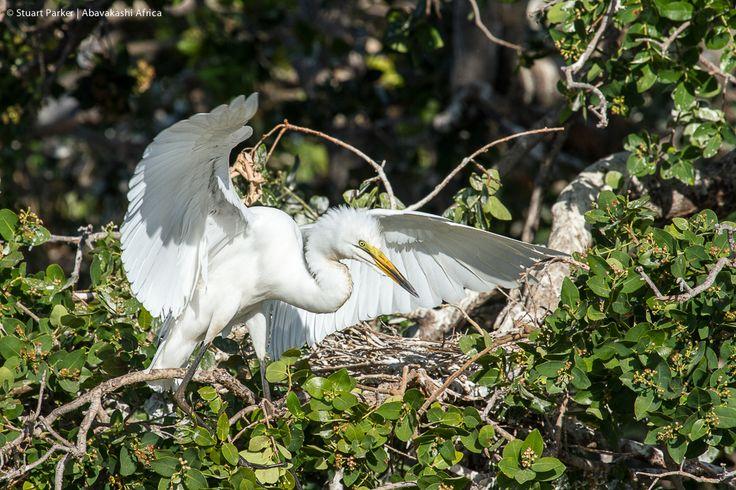 Xugana Island Lodge Heronry