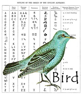 essay in english on birds