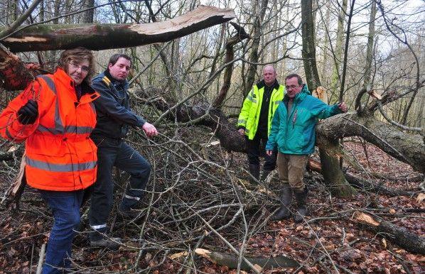 Baum gefällt – Unbekannte zerstören Seeadler-Horst