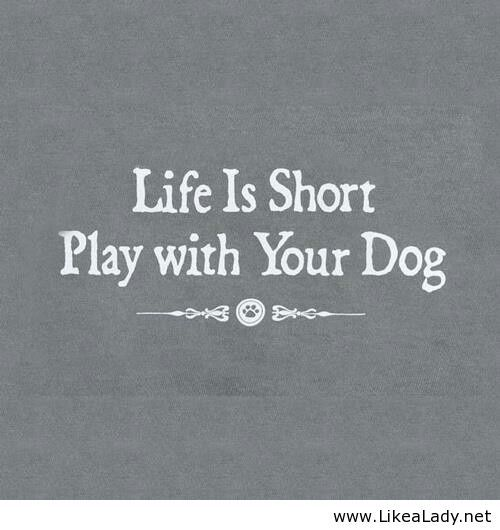 Life is short. Play with your dog.