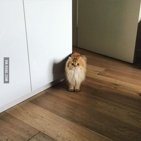 Was that the can opener?