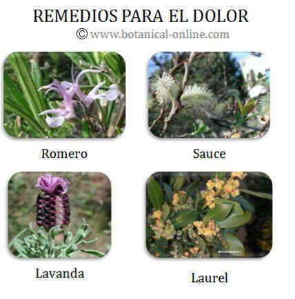 Remedios para el dolor | varios | Pinterest | Natural
