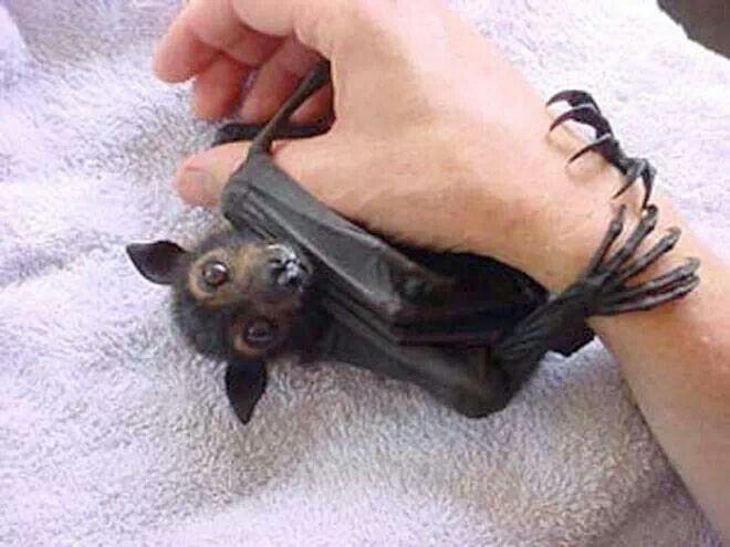 I want a pet bat. | | Cute/feels | Pinterest | Bats ...