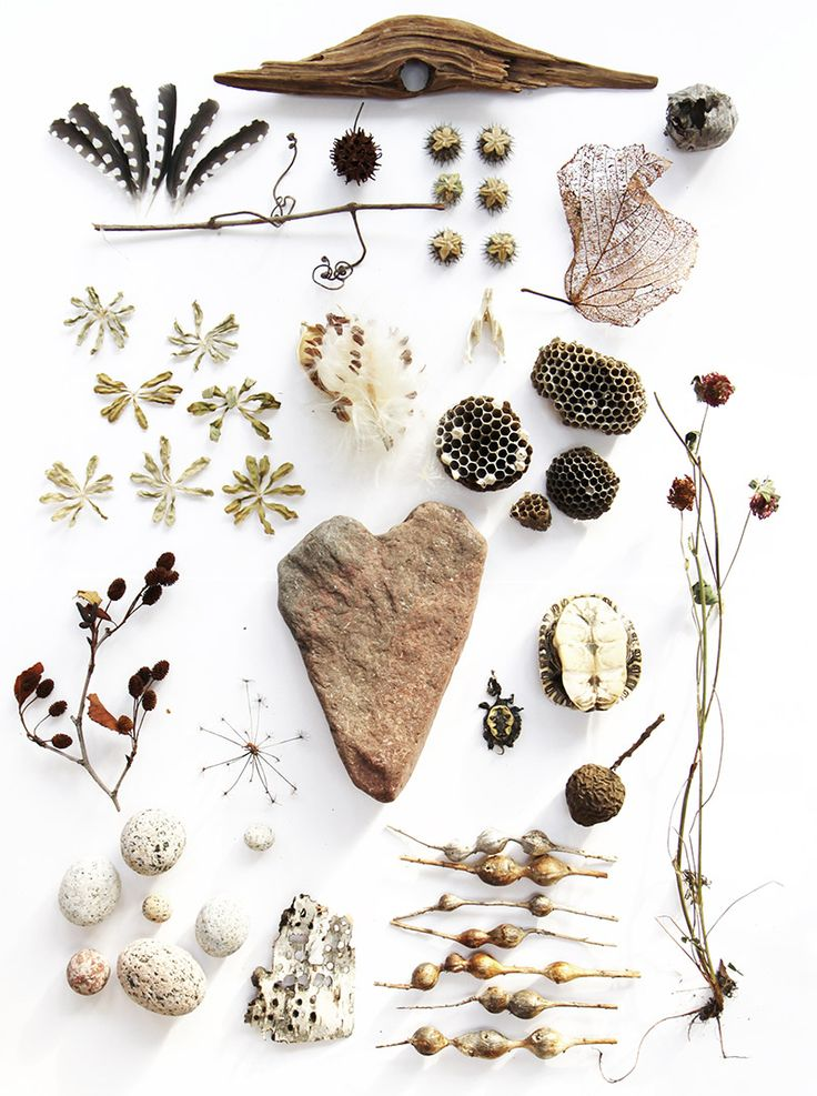 Seeds, pod, stone and sticks - nature's delight courtesy of Harriet Goodall #natural #style <3