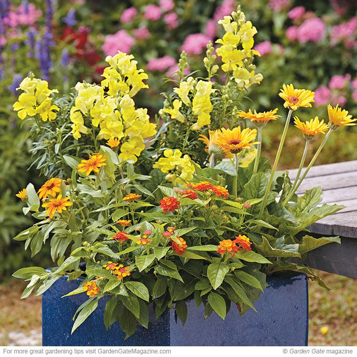 Long Lasting Container Plants
