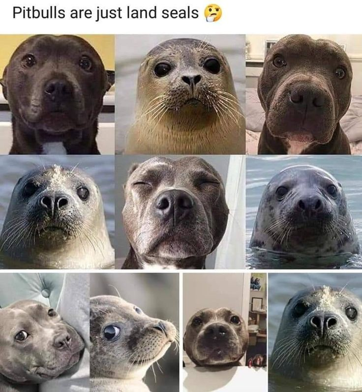 Dog Memes Of The Day 32 Pics – Ep28 #dogs #dogme…