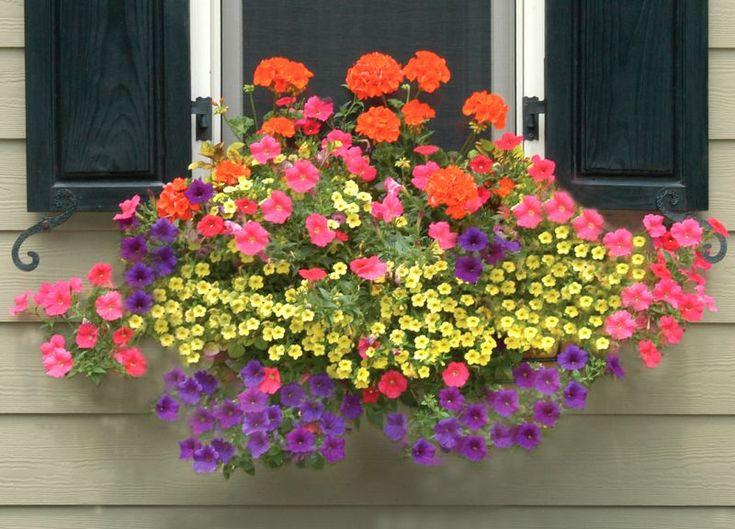 Window Box Planters-Wall Planters-Side Planting: Pamela Crawford » Side Planting