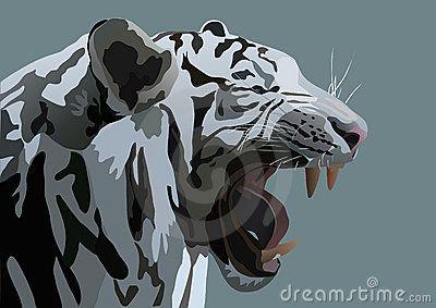 tigre de bengala dibujo - Buscar con Google