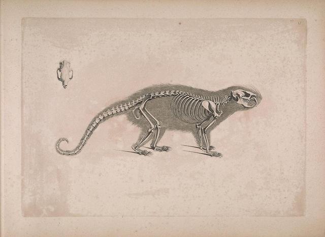 60 best sistema oseo images on Pinterest | Anatomía animal, Animales ...