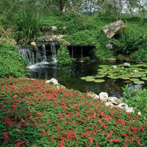 17 best images about florida been there done that on - Botanical gardens gainesville fl ...