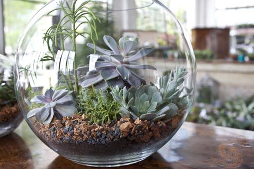 Sweet Peach - Home - Terrarium How-ToGardens Ideas, Decor Wedding, Green Things, Diy Terrariums, Easy Centerpieces, Wedding Style, Succulents Terrarium, Centerpieces Wedding, Fishbowl Terrariums