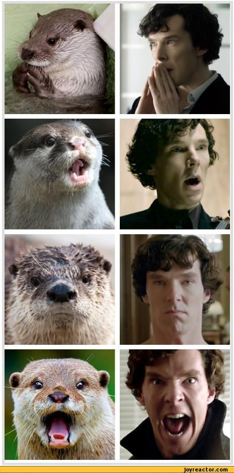 Two of my favorites combined in one pin! Otter vs Cumberbatch