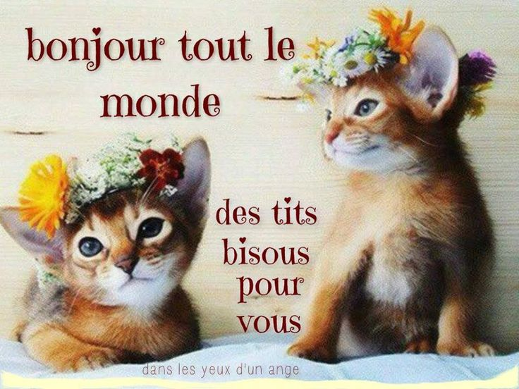 Fabuleux 65 best images bonjour images on Pinterest | Messages, Good night  FL96