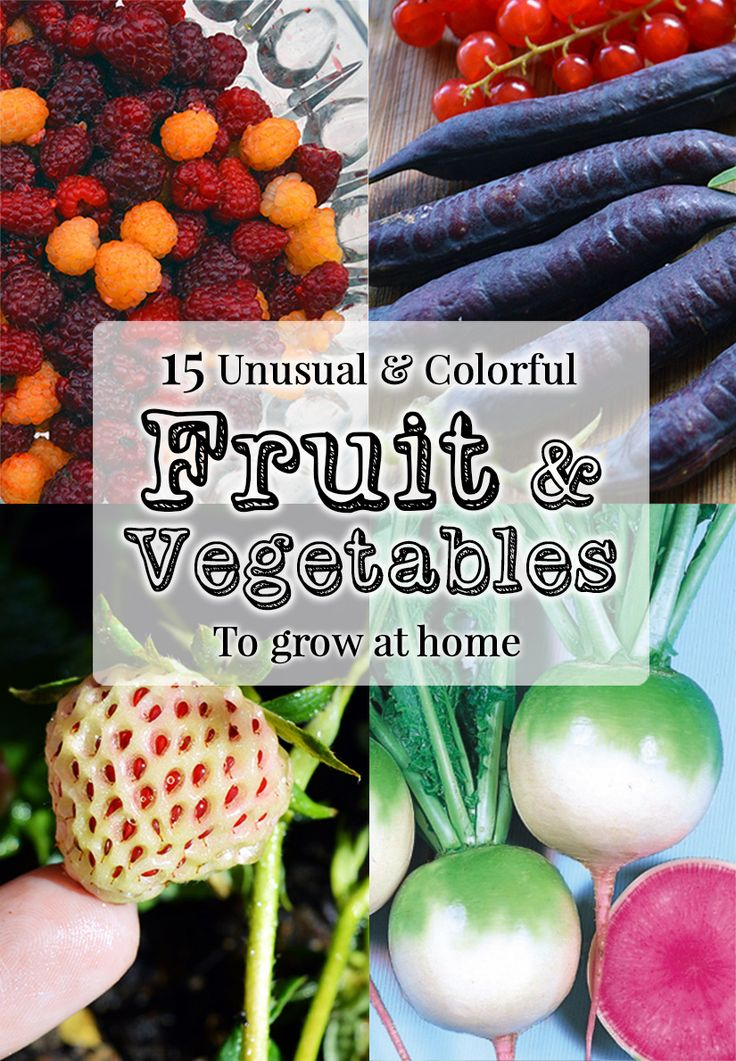 15 Unique Fruits U0026 Vegetables To Grow This Year: From Pink Radishes To  White Strawberries