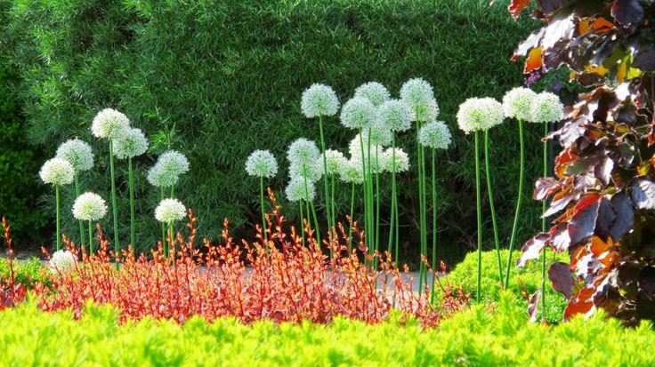 Toronto Gardens – Page 3 – A noun.  A verb.  A blog.