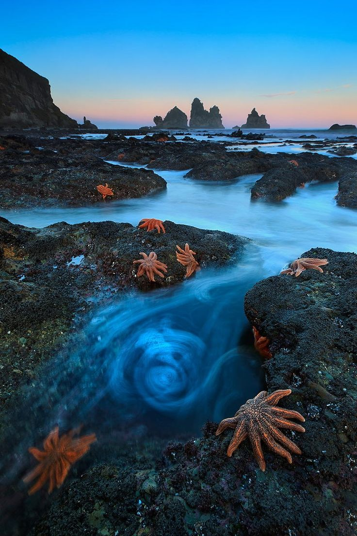 Dawn Stars - From the incomparable west of coast of New Zealand this is currently my most well known photograph, successful in both the 2011 Veolia Wildlife Photographer of the Year and Windland Smith Rice awards. I will be a guest speaker at the Auckland Museum when the WPOTY exhibition opens in August 2012. I'll be discussing my coastal landscapes from around the world and New Zealand.  http://www.aucklandmuseum.com/default.asp?t=23&cid=&View=FullStory&eventsID=810  http://www.nhm.ac.u...