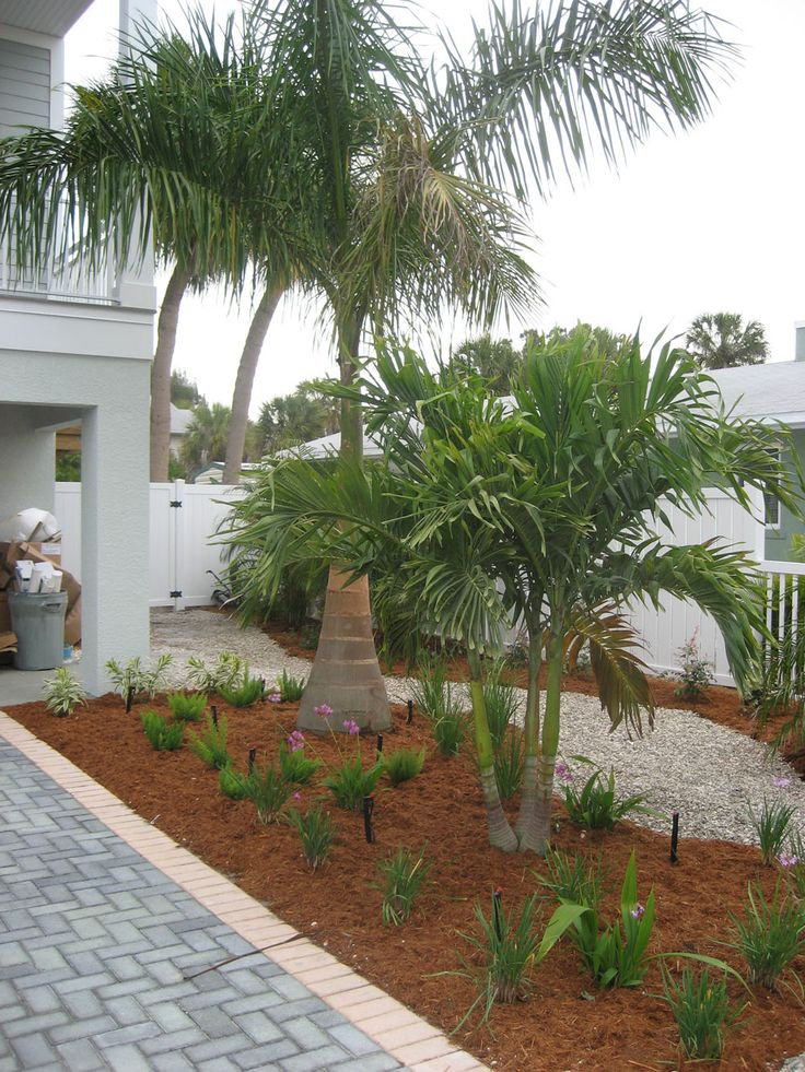 1000+ images about my yard ideas on Pinterest | Valley ... on Backyard Landscaping Ideas With Palm Trees id=57850