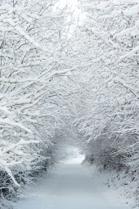 Snowy Trees and Road