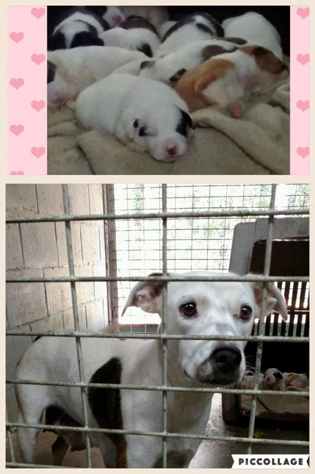 With Rescue ❤️Adoptions Are Likely Needed!! Middle Ga the Forgotten one's. MOM AND BABY'S IN NEED OF IMMEDIATE RESCUE! Medium Size Mom with 10 puppy's , 2 weeks old! THEY SIT IN A RESCUE ONLY FACILITY WE'RE THEIR ONLY CHANCE. ONLY RESCUES CAN SAVE THEM. NO FAULT OF THESE POOR DOGS STUCK HERE.If you can help please contact Charli cstinson@pstel.net https://www.facebook.com/photo.php?fbid=1834896480062217&set=a.1700372086847991.1073741828.100006256487042&type=3&theater