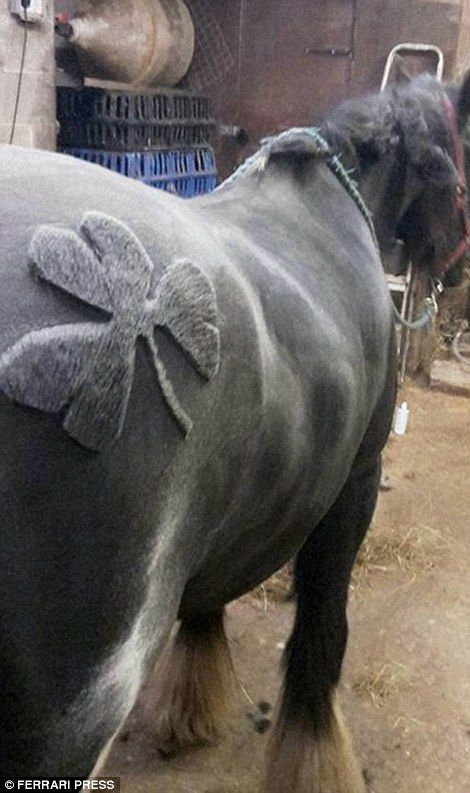 Horse clipper becomes sensation after trimming a series of complex designs | Daily Mail Online