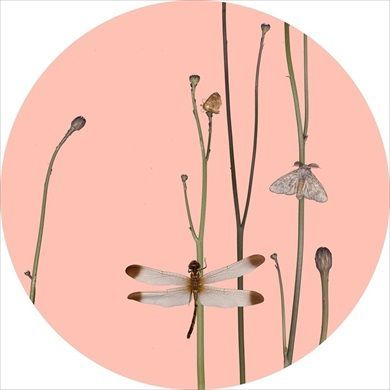 Sandra Kantanen Untitled (Moth 7), 2014