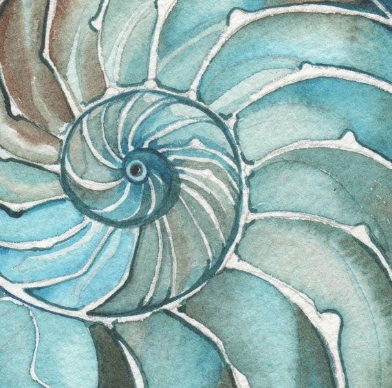 NAUTILUS 5 x 7 print of detailed watercolour by DeepColouredWater