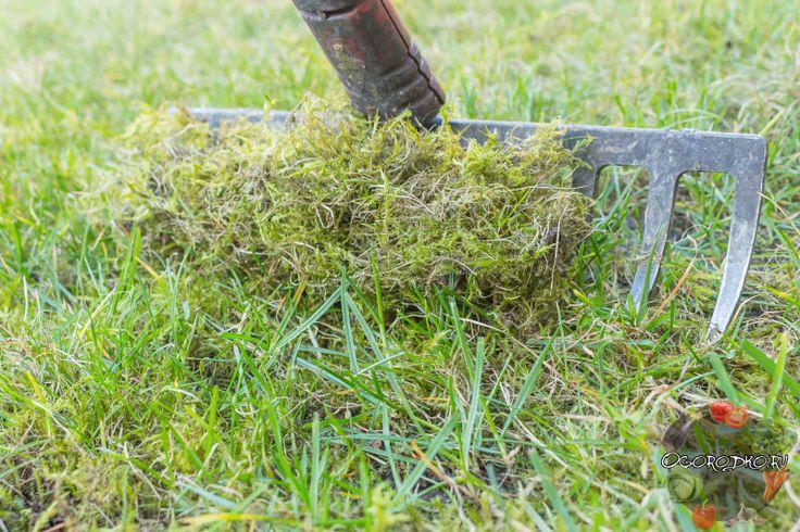 Мох на газоне – как избавиться быстро и просто, эффективные способы и приемы, дихлорофен от мха, препараты от мха на газоне, как избавиться золой, железный купорос