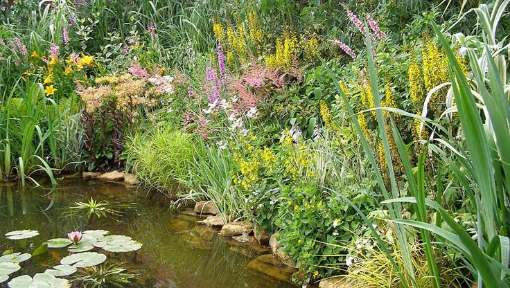 20 Best Wendell Mossy Woodland Garden Images On