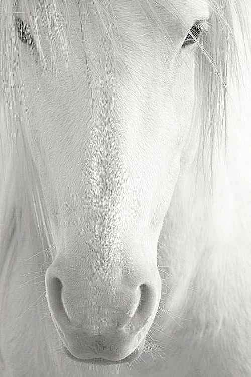 Now ...the only white horse I'd want!