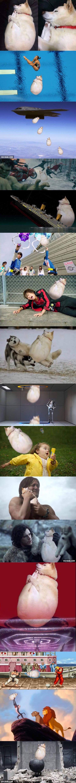 perrito super gordito version blanco