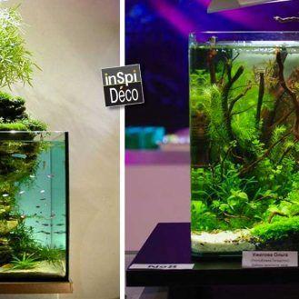 25 best ideas about petit aquarium on pinterest for Petit aquarium original