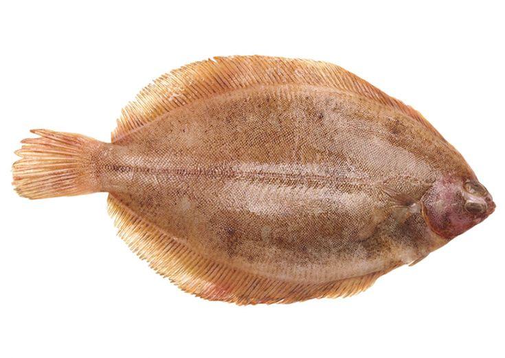 Dit jaar koos VLAM de tongschar tot 'Vis van het jaar'. Zachter van vlees dan echte tong, leert Nick Trachet ons. Hij trakteert op een recept 'van de...