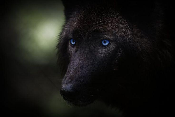Black Wolf | Halloween | Pinterest | I am, Handsome man ...