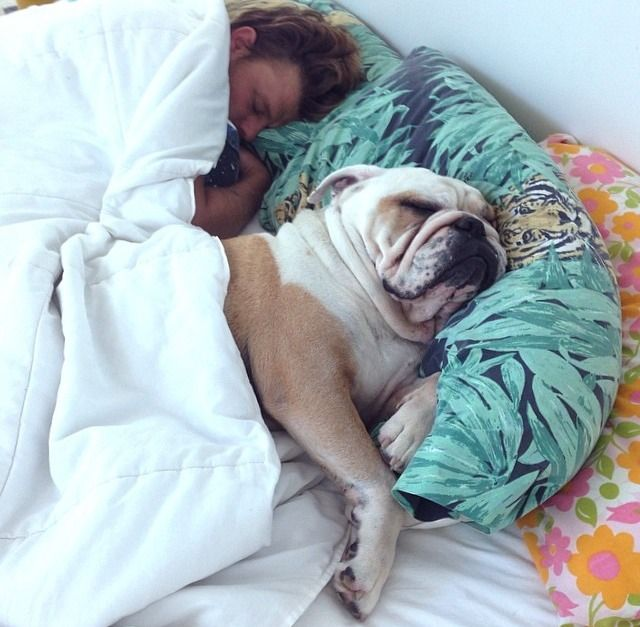Bullies are wonderful sleeping partners!