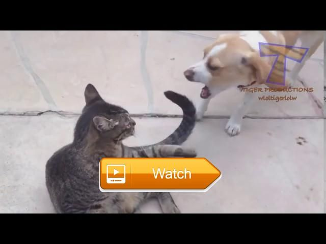 Cats and dogs together are so silly Funny cat dog compilation  Funny Dogs Funny Dog Pictures Funny Dog Memes Funny Dog Names Funny Dog Costumes Funny Dog Quotes Funny Dog Pics Funny Dog Faces Funny  on Pet Lovers