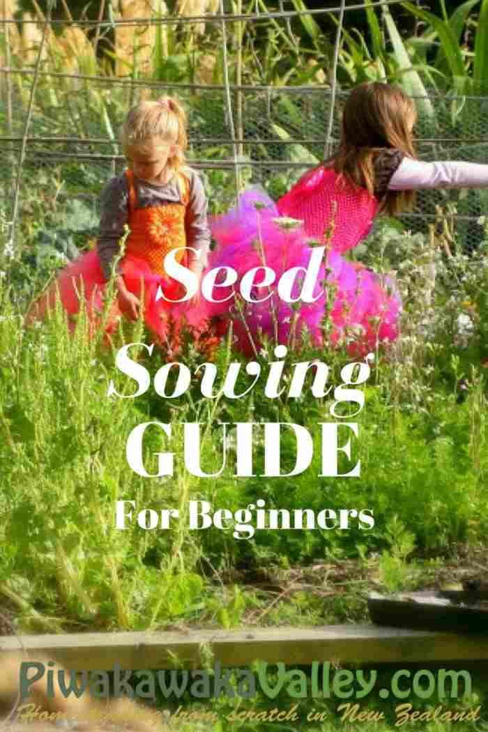 Homesteading In Nz Seed Sowing Guide For Beginners Seed Sowing