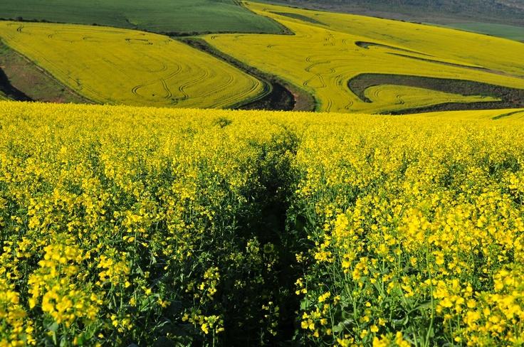Overberg region, South Africa