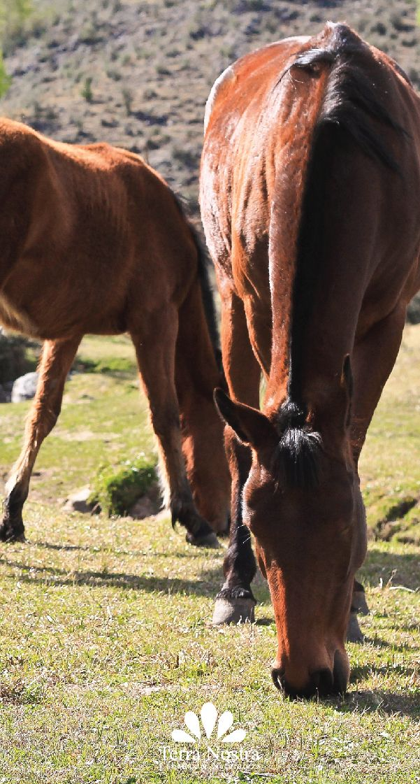 Pasear y encontrarnos con amigos! Cabañas Terra Nostra La Cumbrecita en Córdoba #TerraNostra #Travel #Trip #Argentina #Cordoba #LaCumbrecita #Pin #Trekking #Cabañas #Facebook -->> http://bit.ly/TerraNostra