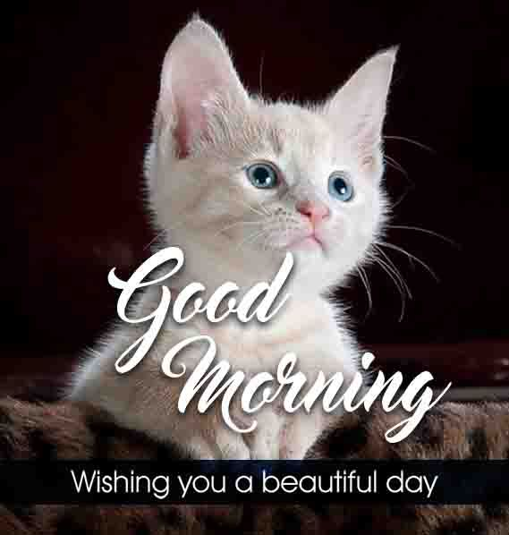 White Cat Good Morning Wish Image In 2020 Good Morning Beautiful Good Morning Wishes Love Good Morning Images