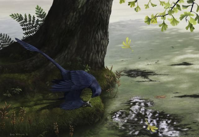 Meet Microraptor, the World's Smallest Dinosaur: Adult Microraptors Weighed Only Two or Three Pounds