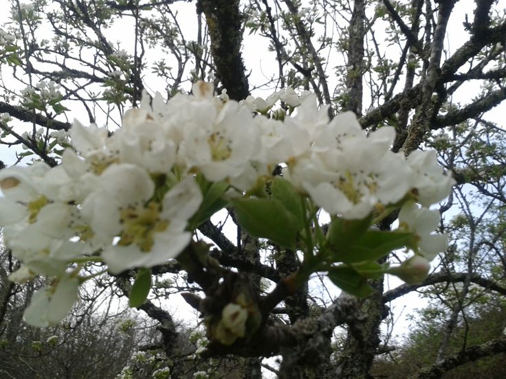 Fruitier au printemps