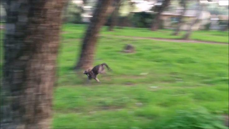 Η βόλτα με την γάτα μου.Μέρος 2ο.Δίνουν προσοχή οι γάτες?Ο vegan εξερευν...