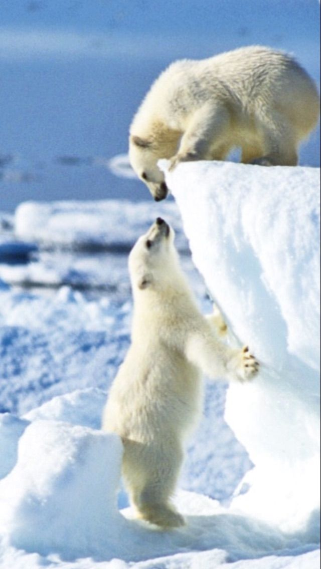 """""""Hallo du da oben!"""" """" Hey du da unten!"""""""