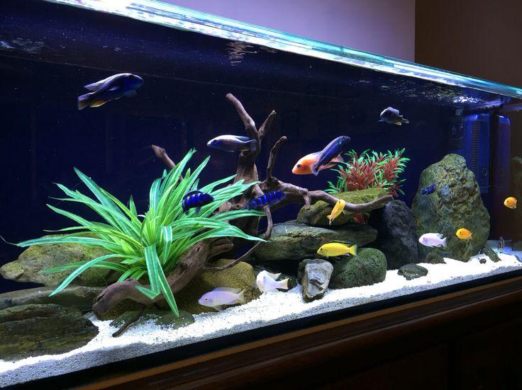 25 Best Ideas About 4ft Fish Tank On Pinterest Pet