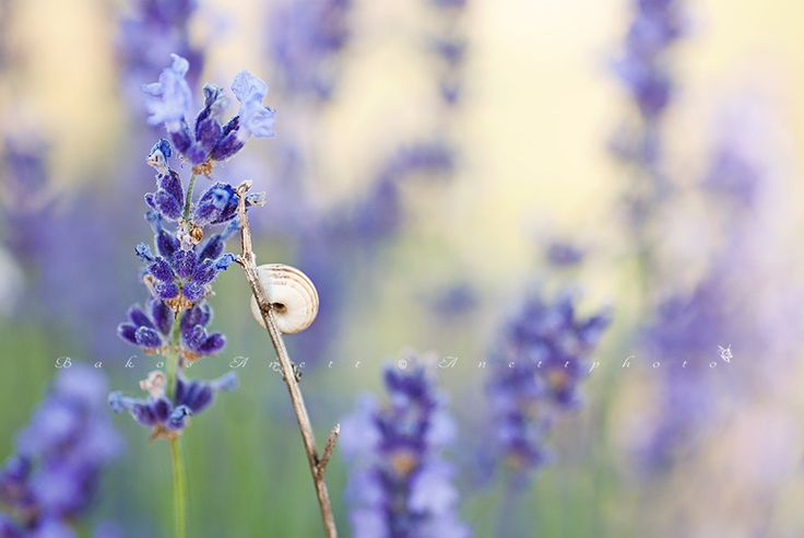 Lavender moment by anettphoto on 500px