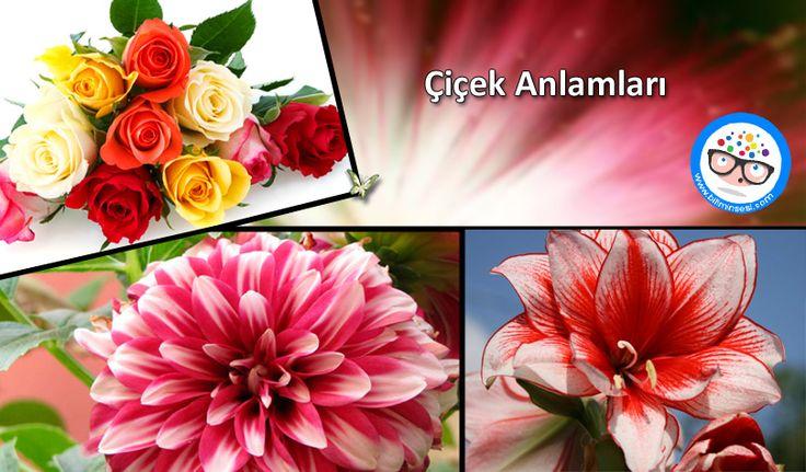 Çiçek Anlamları - https://www.biliminsesi.com/cicek-anlamlari/ - Anemon Çiçeği, Arslanağzı Çiçeği, Ay Çiçeği, beyaz gül, Cennetkuşu çiçeği, çiçek, çiçek anlamları, çiçekler hangi simgeleri içerisinde taşır, çiçekler neleri temsil eder, Çiçeklerin Anlamları Nelerdir, Dafodil Çiçeği, Düğün Çiçeği, Filamingo Çiçeği, Garbera Çiçeği, Gardenya, Gül, Hezaren Çiçeği, İris (Süsen) çiçeği, Kalla Zambağı (Gelin çiçeği), Kara