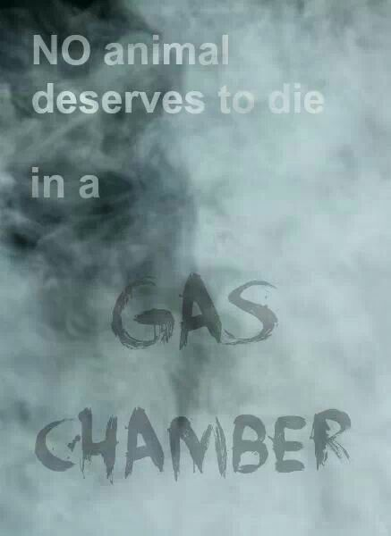 NO animal deserves to die in a gas chamber.: